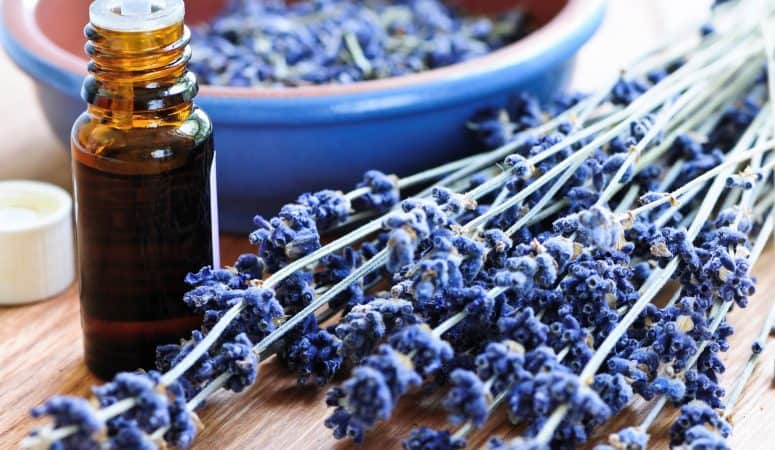 5 uses for pure lavender essential oil