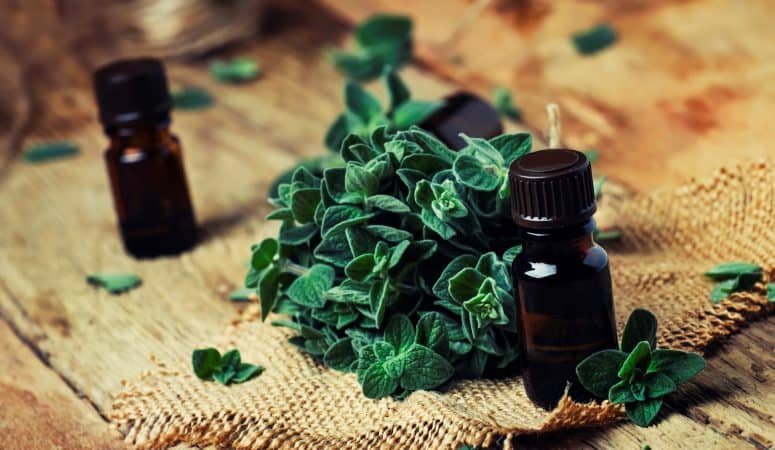 4 uses for oregano essential oil