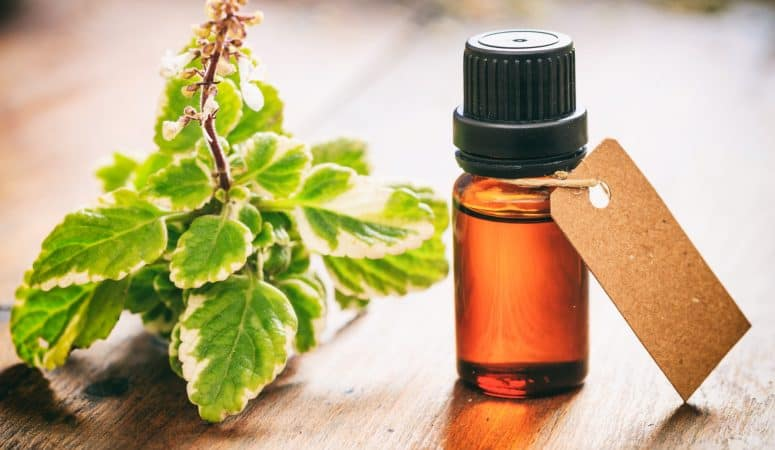 5 uses for melaleuca essential oil