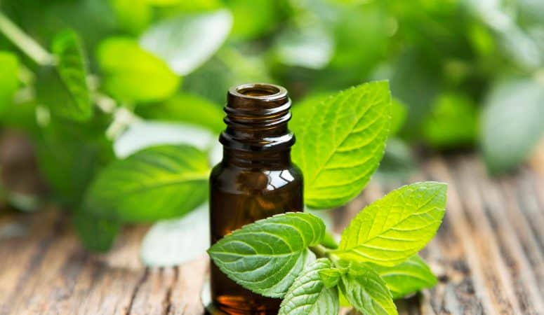 Peppermint Essential Oil for Spiders and Pests