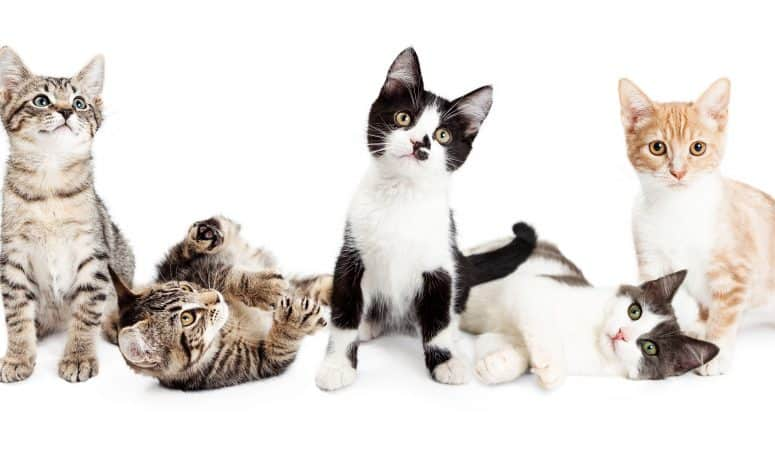 Best Essential Oils for Cats