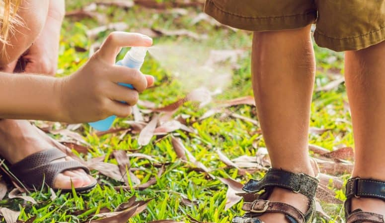 The Best Natural Mosquito Control for Those Annoying Bugs